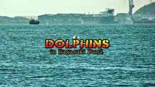 長崎港にイルカの大群!