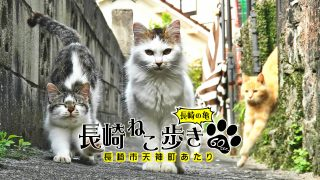 長崎ねこ歩き~天神町あたり~